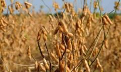 Este ano, o Tocantins plantou mais de 55 mil hectares de soja ao longo do período do vazio sanitário