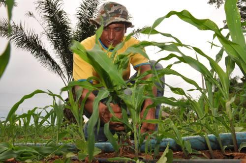 A Seagro tem feito gestão junto à Sefaz na busca pela diminuição do valor da taxa do ICMS do milho