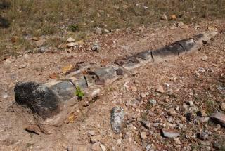 Estudantes puderam visitar os sítios paleontológicos e arqueológicos onde são encontrados os fósseis
