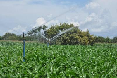 Nos projetos hidroagrícolas são utilizados os sistemas por microaspersão,  gotejamento e aspersão convencional