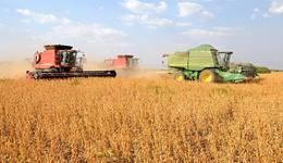 A produção de soja desta safra deve ultrapassar a anterior, saltando de 2 milhões de toneladas para 2,3 milhões