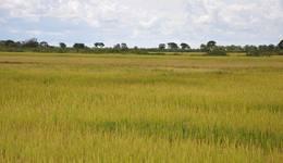 O Tocantins tem como meta dobrar a produção de arroz em dez anos