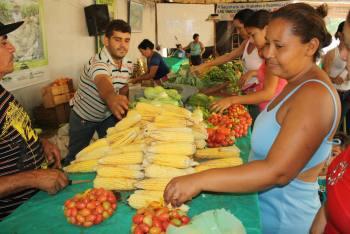 Feiras da agricultura visam melhoria na qualidade da produção e geração de renda - Lucia Brito / Núcleo Agricultura
