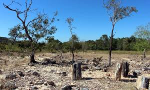 O Monumento Nacional das Árvores Fossilizadas do Tocantins está localizado no município de Filadélfia, a 438 quilômetros de Palmas