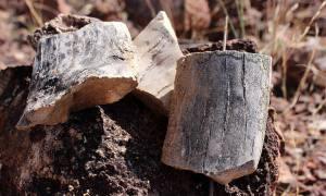 O monumento é a floresta petrificada mais importante do Hemisfério Sul do período Permiano