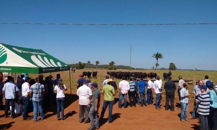 O segundo encontro foi realizado em Angico - Bico do Papagaio