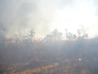 Canavial pega fogo,  clima seco e baixa umidade colaboram na propagação