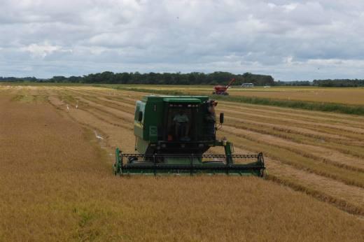 O plantio de grãos é um dos pontos fortes da agricultura tocantinense