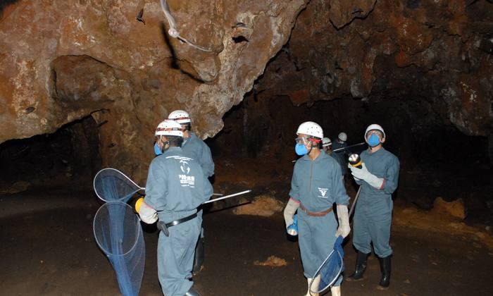 Equipes de captura de morcegos hematófagos estarão em Brejinho de Nazaré  e  Lagoa  do Tocantins