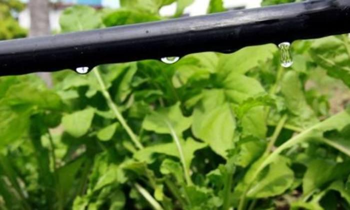 Técnica de irrigação ensinada pelo Senar
