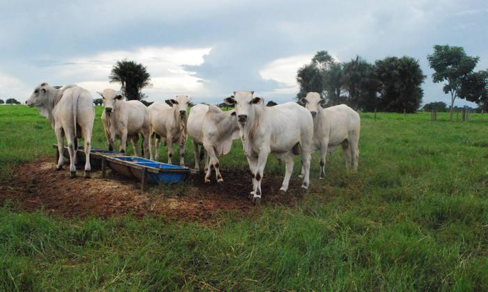 Vacinação antirrábica é obrigatoria para todos os animais herbívoros (bovídeos, equídeos, ovinos e caprinos), independente da idade