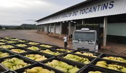 A estrutura atenderá os produtores do cinturão verde de Palmas, 16 municípios da região metropolitana e os Estados do Matopiba: Maranhão, Tocantins, Bahia e Piauí