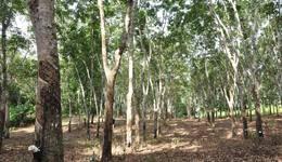 O Encontro acontece de 19 a 22, nos municípios de Colina, Pindorama, Cedral, Colômbia e Barretos no Estado de São Paulo