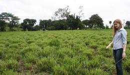 Para a zootecnista do Ruraltins, Ana Clara Bohnem, as mais de 30 URT's implantadas fez o Tocantins ser destaque na execução do Plano ABC