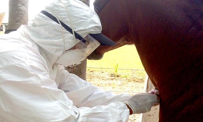 Adapec continua monitorando os animais na região