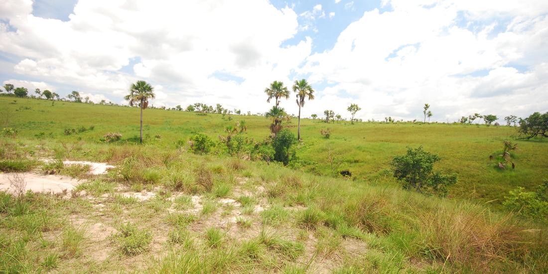 Vereda Bioma Cerrado - Jalapão