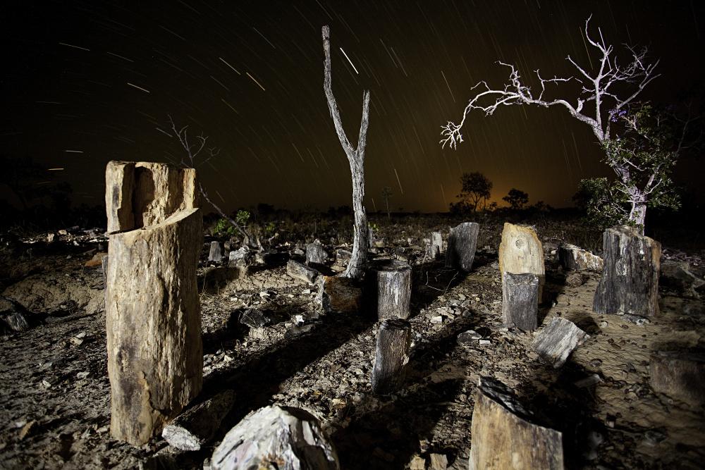 À noite, as árvores petrificadas no Monumento Natural das Árvores Fossilizadas. Foto: Acervo Semades