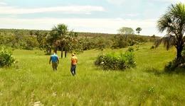 está sendo realizado em veredas que apresentam a produção do capim, conforme apontado pelas comunidades autorizadas a participar da colheita