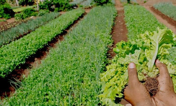 A semana dos orgânicos traz o tema: Educar para colher sustentabilidade no campo e na cidade