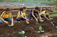 Serão beneficiadas com as hortas, o Colégio Girassol de Tempo Integral Rachel de Queiroz, a Escola Estadual Frederico José Pedreira Neto e o Colégio Girassol de Tempo Integral Augusto dos Anjos
