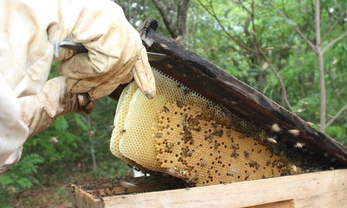 Impulsionar a produção de mel no Estado é uma das metas das visitas técnicas