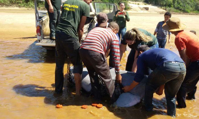 O esforço conjunto vem sendo realizado para possibilitar o resgate e salvamento de espécies que possam se encontrar em áreas de risco no afluente, devido ao período de estiagem