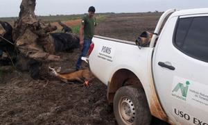 Cervo será levado ao Centro de Triagem de Animais Silvestres