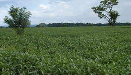 O objetivo do Agro+ é reduzir a burocracia e simplificar os serviços tornando os estados competitivos com maior inserção no mercado internacional do agronegócio