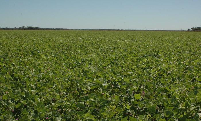 A Estimativa da Conab para a Safra 2016/2017 para o Tocantins é de plantio de área de 22 mil hectares e produção de 23 mil toneladas