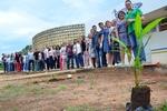 Servidores do Lacen participam de projeto dedicado à arborização de ambiente de trabalho
