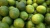 Todo limão produzido no projeto é vendido no mercado da Capital e ainda há uma demanda de mais de 11 mil kg, ao mês