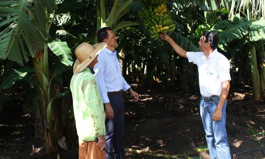 O projeto de irrigação São João teve início em 2001 e compreende a implantação de infraestrutura para hortifrutigranjeiros e frutas
