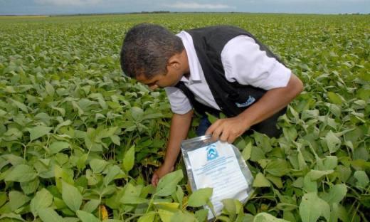 De acordo com a Adapec, na questão fitossanitária, em detrimento do clima seco e falta de chuvas, tanto pragas e doenças até o momento não foi registrado grandes problemas nesta safra