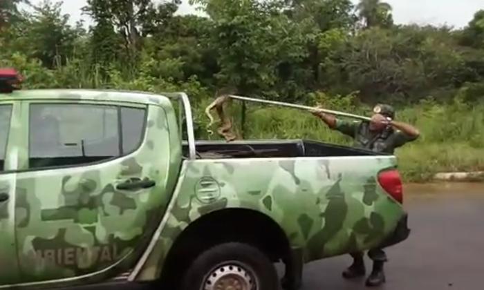 BPMA captura jiboia em Palmas.png