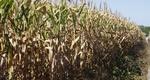 O Zoneamento Agrícola de Risco Climático para a cultura de milho 2ª safra no Estado do Tocantins foi publicado através da Portaria nº 232