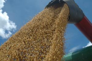 A soja, grão mais cultivado no Estado, com área de 953 mil hectares, deve colher mais de 2,7 milhões de toneladas