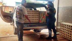 Quem for flagrado traficando animais silvestres pode ser multado em R$ 500,00 por exemplar