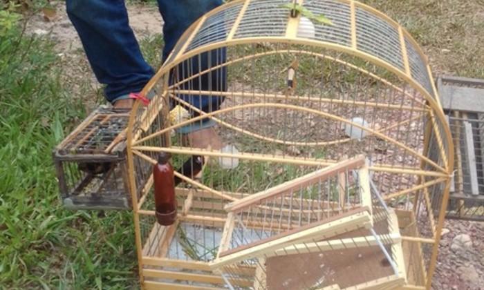 Criadouro de passeriforme é embargado em Lagoa da Confusão
