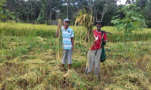 Mais de 80 famílias assentadas da reforma agrária, quilombolas e agricultores tradicionais serão beneficiadas com a colheita do arroz em Natividade