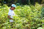 A Agricultura Urbana é realizada, geralmente, em pequenas áreas e destina-se sobretudo a uma produção para consumo próprio