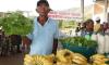 6.250 agricultores familiares estão cadastrados para comercializar sua produção ao programa.