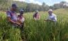 A produção do arroz no Tocantins alcançou na safra 2015/2016 mais de 570 mil toneladas de grãos, de acordo com dados da Conab