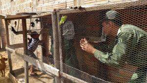 Pássaros mantidos em cativeiro na região sul de Gurupi