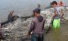 Projeto tem por objetivo conhecer, de forma participativa com os pescadores, as tecnologias empregadas nas capturas, nas embarcações e nas formas de conservação do pescado a bordo