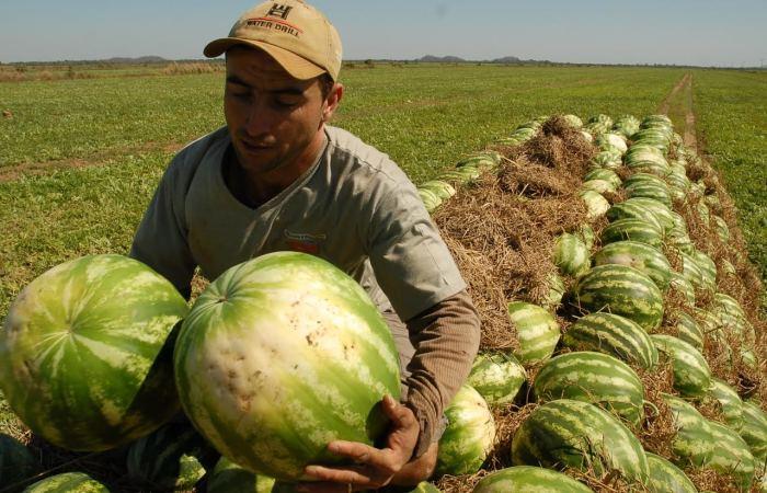 O objetivo é contribuir com o desenvolvimento dos médios produtores, melhorando a sua produtividade