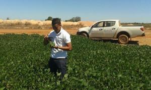 Plantio de soja só pode ser utilizado para fins de produção de sementes ou pesquisa