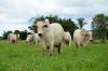 Programa Pró-Genética Tocantins busca o melhoramento genético do rebanho, a fim de ter uma produção de qualidade na pecuária de corte e leite