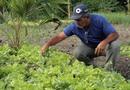 Comenda Boas Práticas Sustentáveis vai premiar proprietários rurais ou agricultores familiares que prestem relevantes serviços à causa ambiental e ao uso sustentável dos recursos hídricos