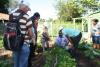 Agroecologia agrotins - Alaides Cardoso- Ruraltins_100.jpg
