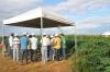 Manivas distribuídas para 500 produtores são frutos do projeto Reniva